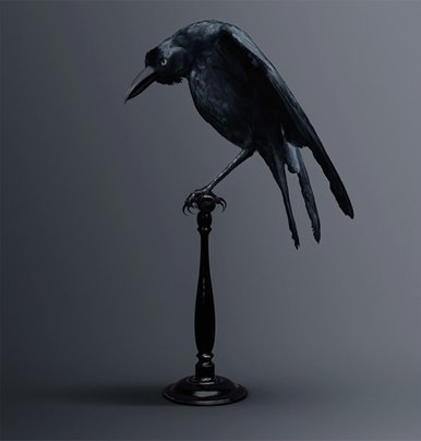 Carrion Bird [Corvus memoria eidetica] Bird of memories